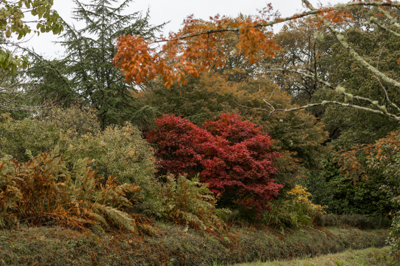 Boconnoc in Autumn